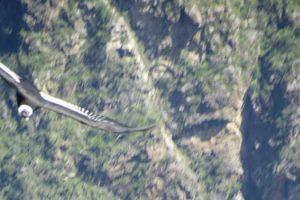 Mirador del Condor Chonta 1D